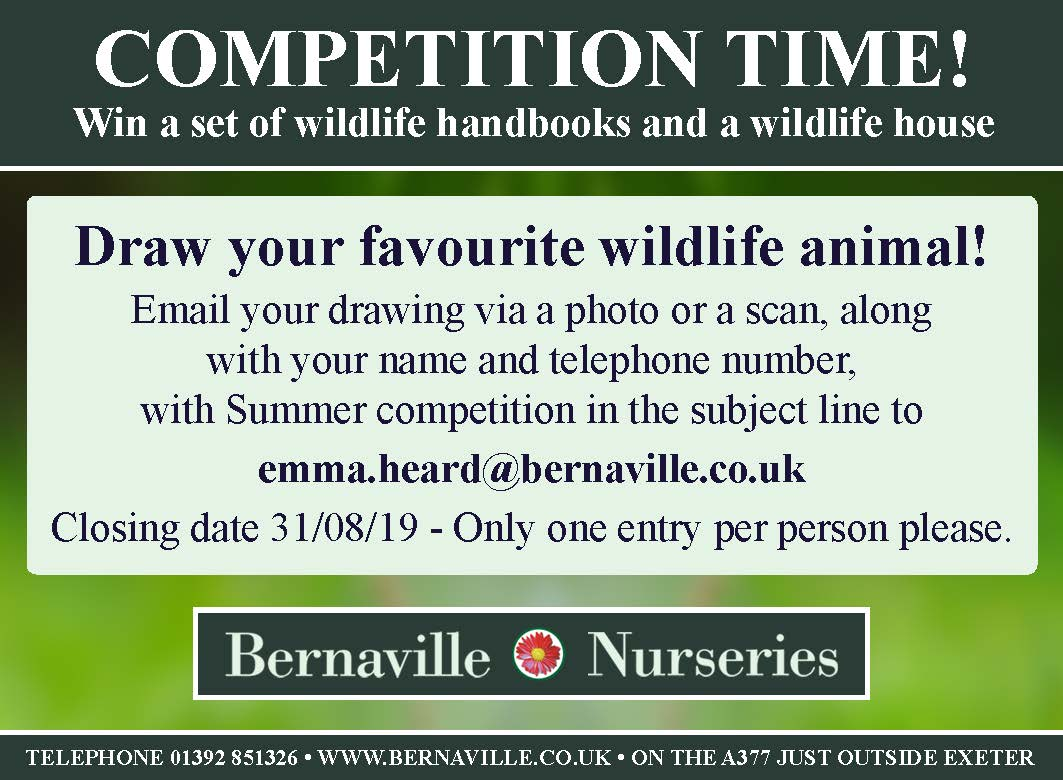 Win! A set of wildlife handbooks and a wildlife house | Primary Times
